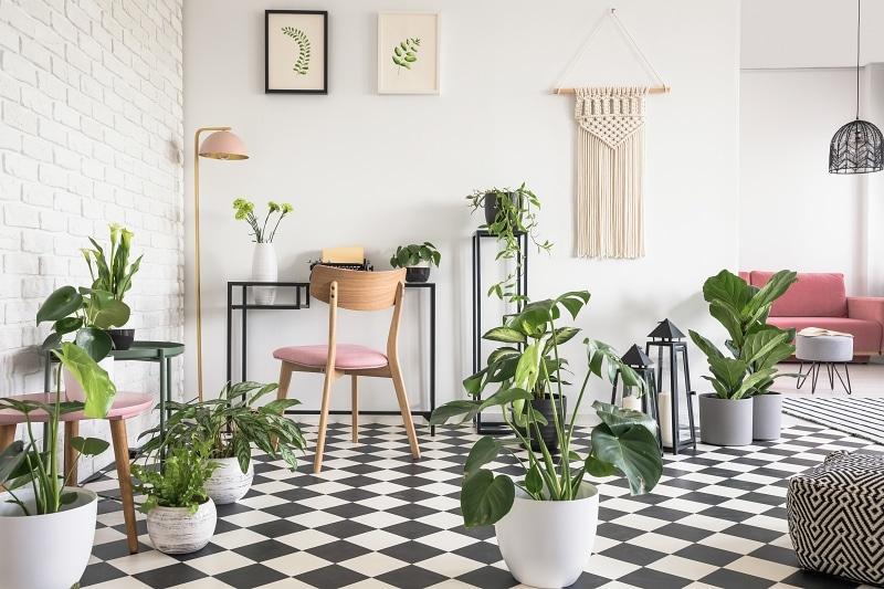 K šachovnicové podlaze hezky ladí zeleň pokojových rostlin.
